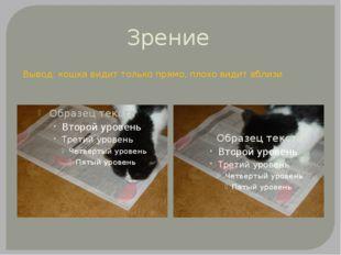 Зрение Вывод: кошка видит только прямо, плохо видит вблизи