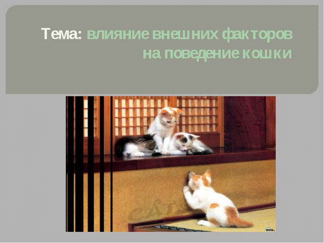 Тема: влияние внешних факторов на поведение кошки