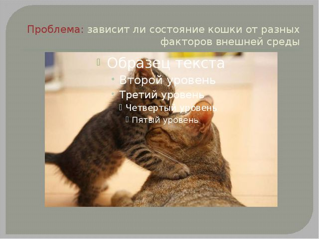 Проблема: зависит ли состояние кошки от разных факторов внешней среды
