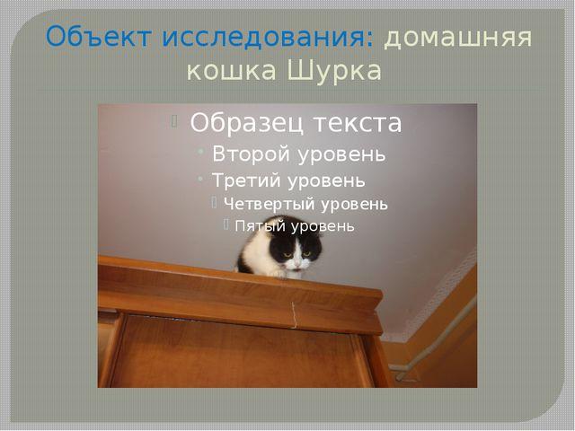 Объект исследования: домашняя кошка Шурка