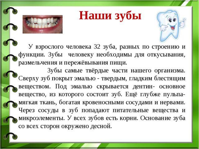 Наши зубы У взрослого человека 32 зуба, разных по строению и функции. Зубы ч...