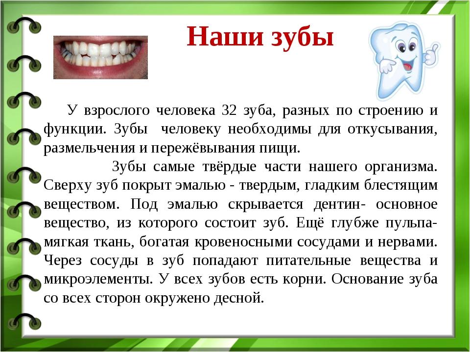В зубах различают: -коронку-часть зуба выступающую в полость рта; -шейку зуба - участок между коронкой и корнем зуба