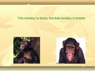 This monkey is funny, but that monkey is funnier