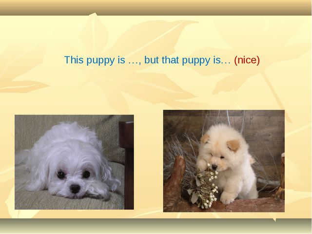 This puppy is …, but that puppy is… (nice)