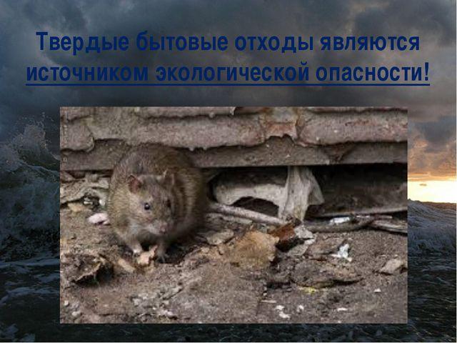Твердые бытовые отходы являются источником экологической опасности!