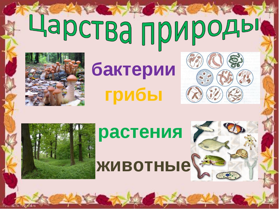 бактерии грибы растения животные