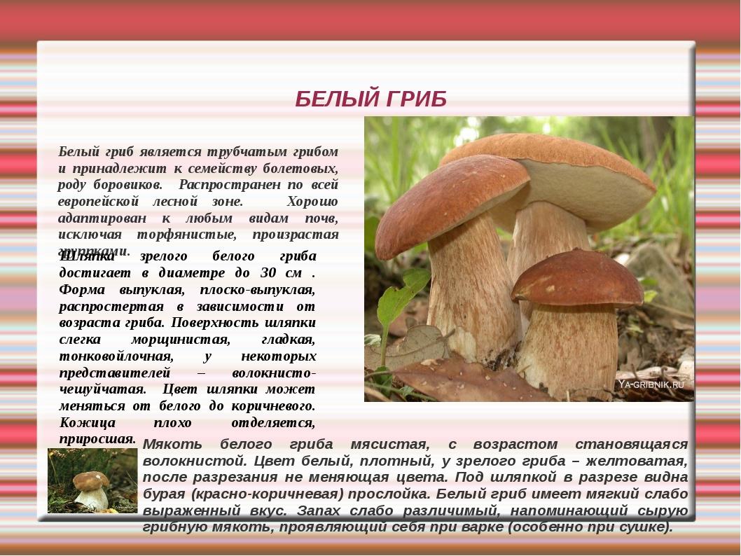 Фото грибов с описанием для определения