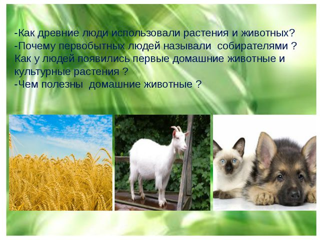 -Как древние люди использовали растения и животных? -Почему первобытных людей...