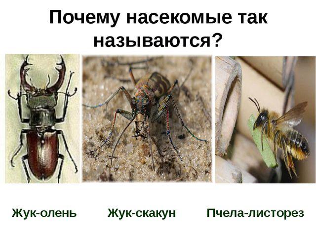 Почему насекомые называются насекомыми
