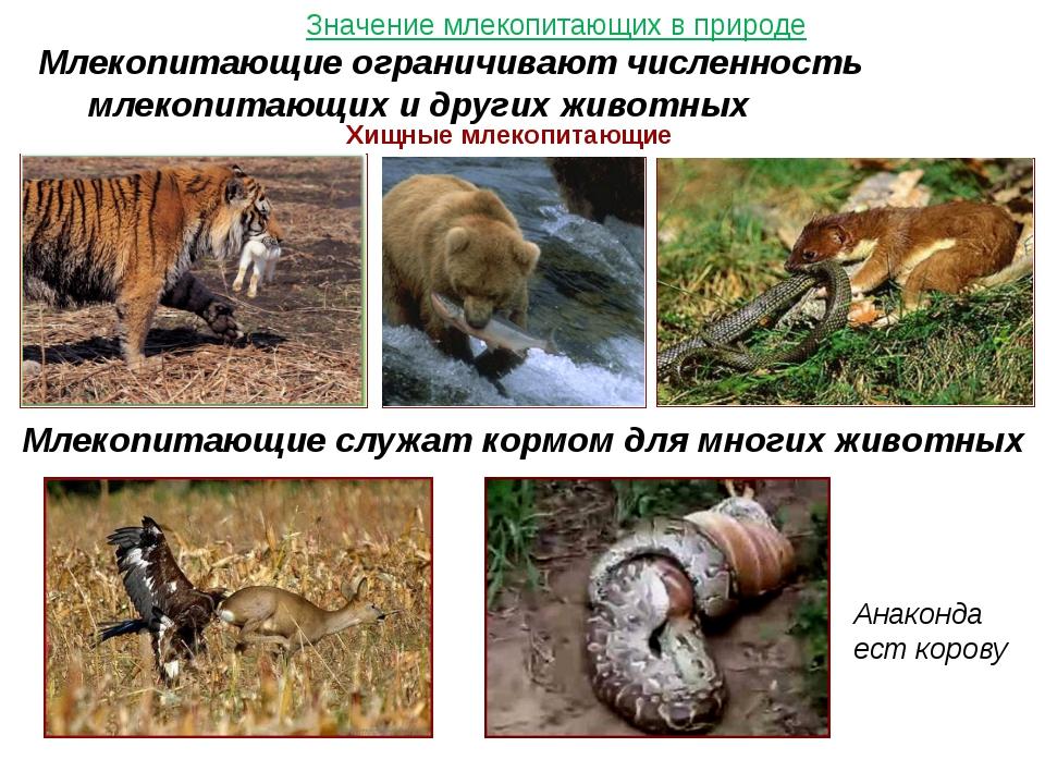 Значение млекопитающих в природе