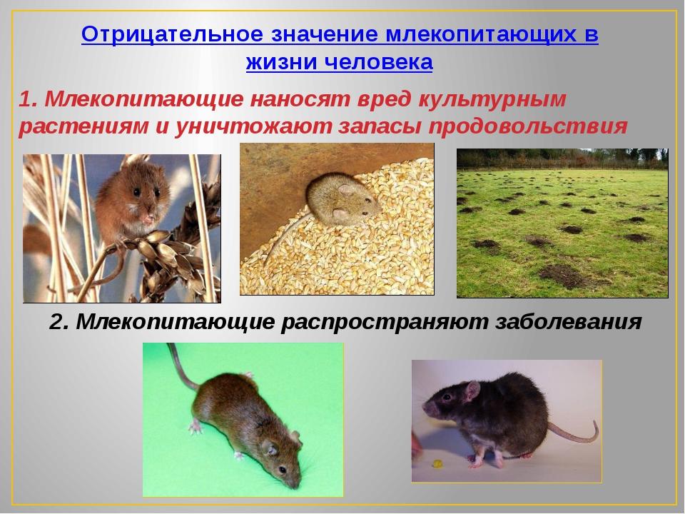 Отрицательное значение млекопитающих в жизни человека 1. Млекопитающие нанос...