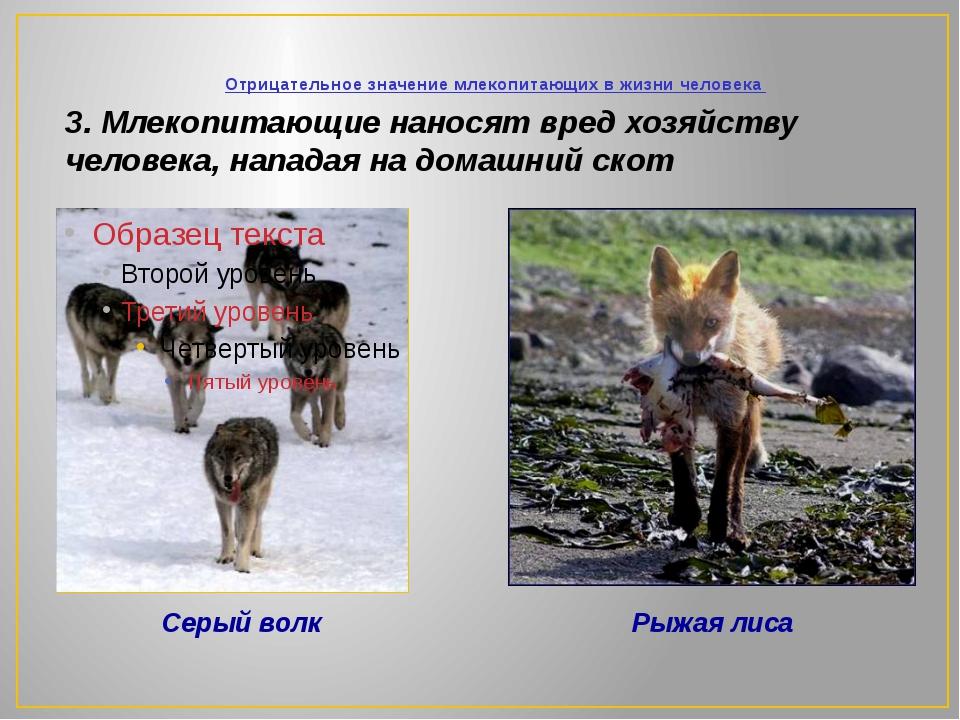 Отрицательное значение млекопитающих в жизни человека