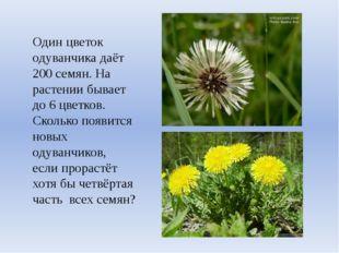 Один цветок одуванчика даёт 200 семян. На растении бывает до 6 цветков. Сколь