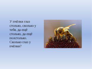 У пчёлки глаз столько, сколько у тебя, да ещё столько, да ещё полстолько. Ско