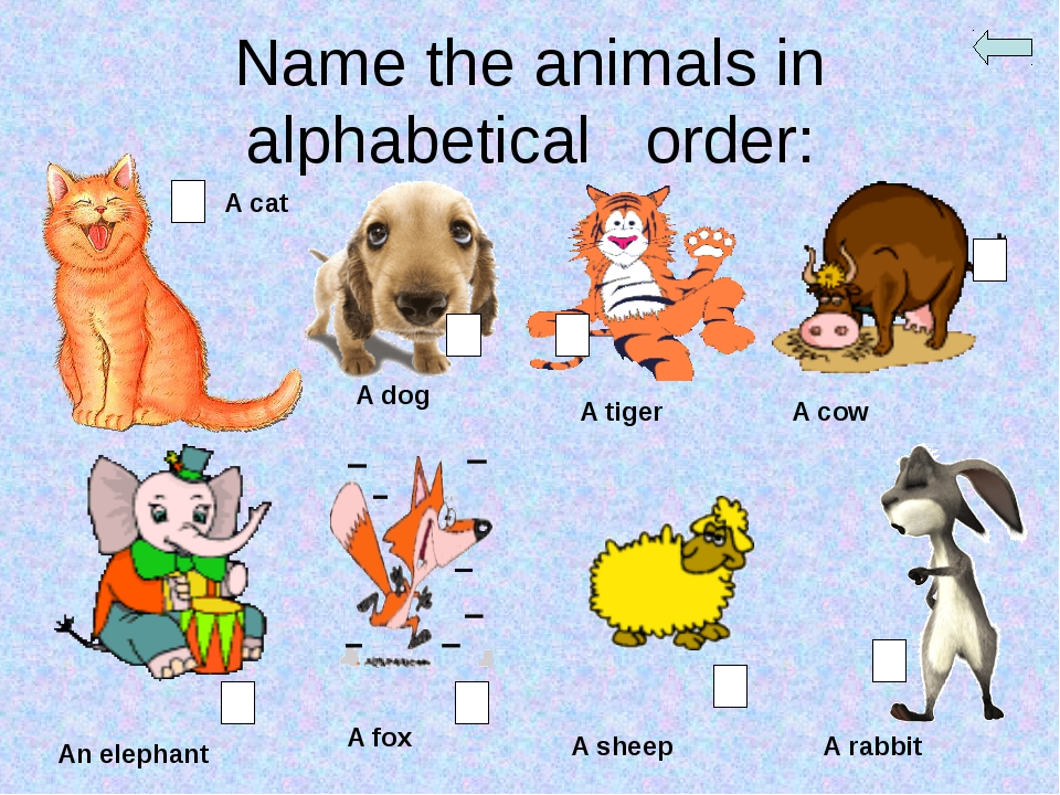 Name the animals in alphabetical order: A cat A dog A tiger A cow An elephant...