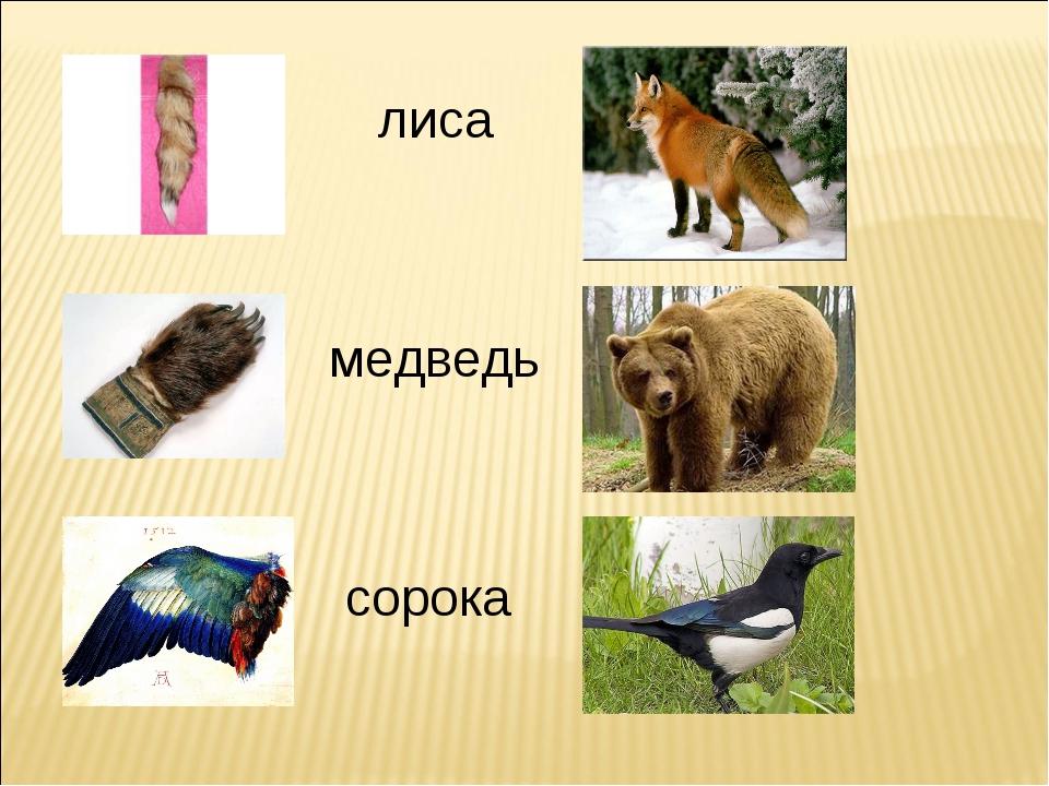 лиса лиса медведь сорока
