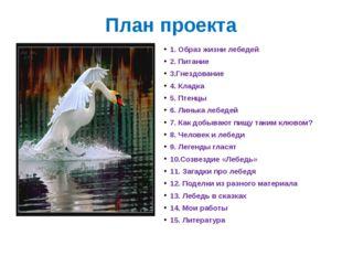 План проекта 1. Образ жизни лебедей 2. Питание 3.Гнездование 4. Кладка 5. Пте