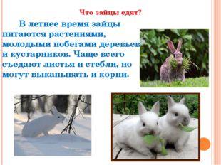 Что зайцы едят? В летнее времязайцы питаются растениями, молодыми побегами