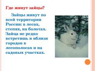 Где живут зайцы? Зайцы живут по всей территории России: в лесах, степях, на б