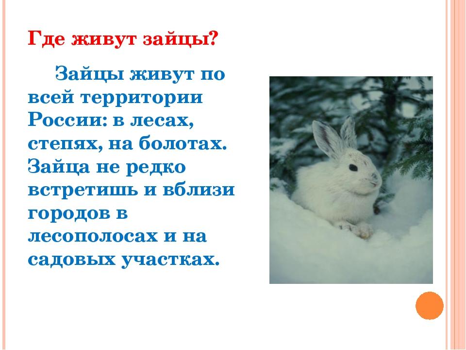 Где живут зайцы? Зайцы живут по всей территории России: в лесах, степях, на б...