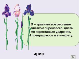 Я – травянистое растение С цветком сиреневого цвета. Но переставьте ударение,