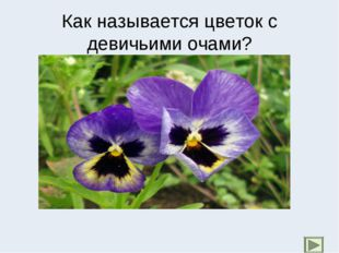 Как называется цветок с девичьими очами?