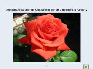 Это королева цветов. Она цветет летом и прекрасно пахнет. роза роза
