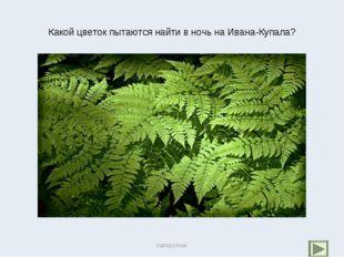 Какой цветок пытаются найти в ночь на Ивана-Купала? папоротник папоротник
