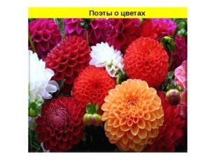 Поэты о цветах