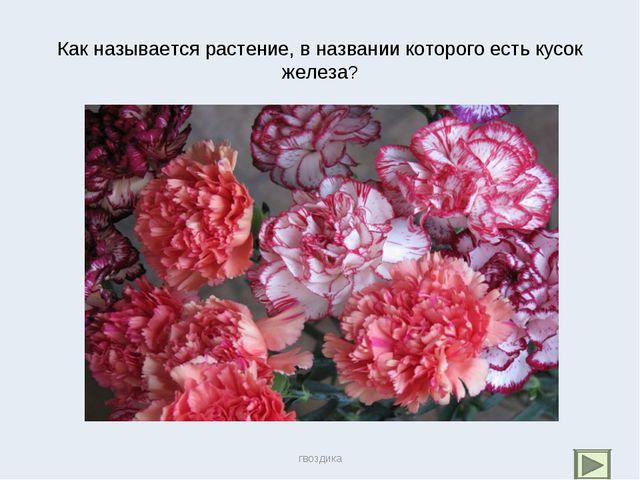 Как называется растение, в названии которого есть кусок железа? гвоздика гвоз...