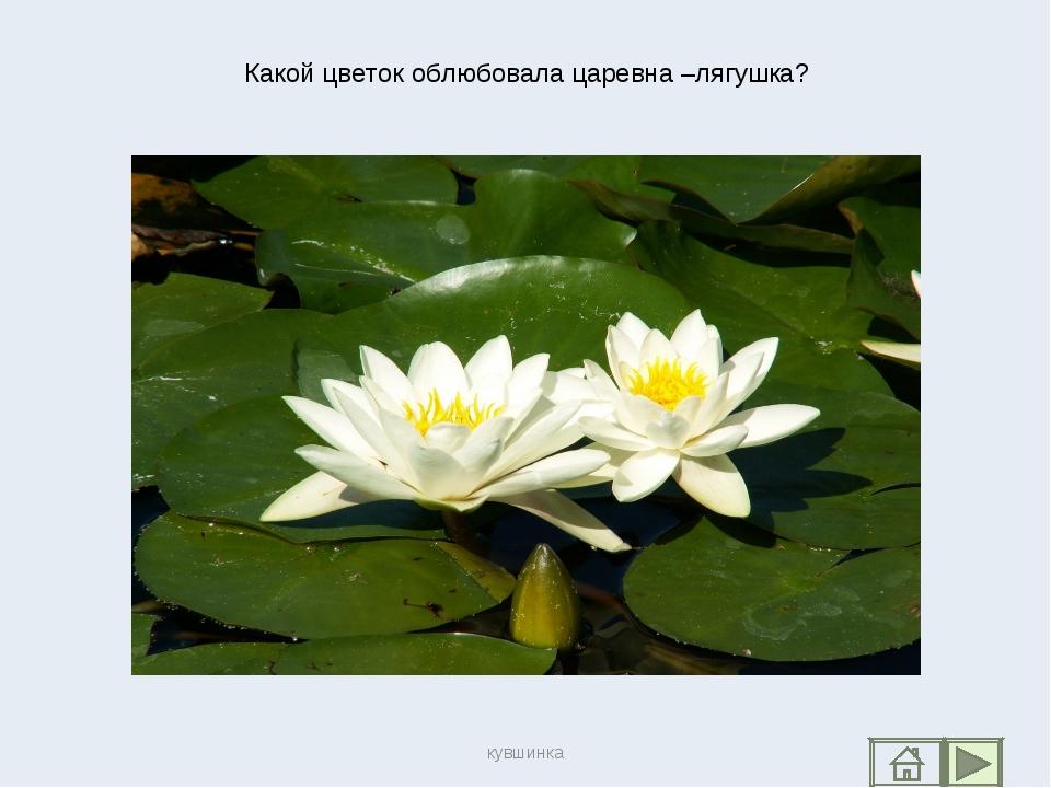 Какой цветок облюбовала царевна –лягушка? кувшинка кувшинка