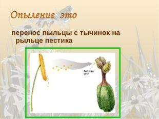 перенос пыльцы с тычинок на рыльце пестика