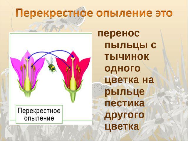 перенос пыльцы с тычинок одного цветка на рыльце пестика другого цветка