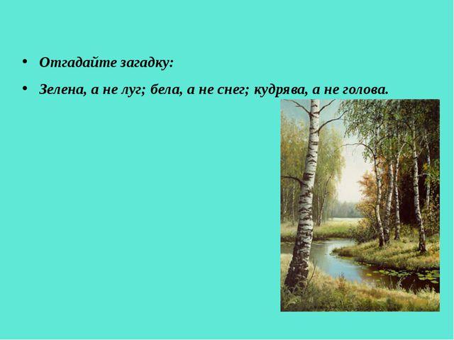 Отгадайте загадку: Зелена, а не луг; бела, а не снег; кудрява, а не голова.