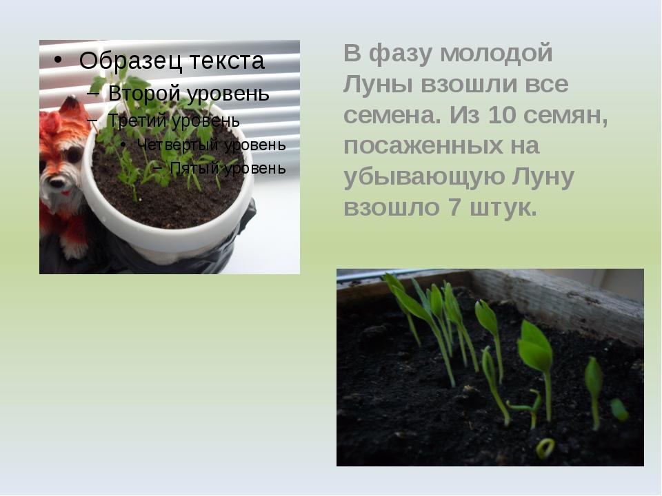 В фазу молодой Луны взошли все семена. Из 10 семян, посаженных на убывающую...