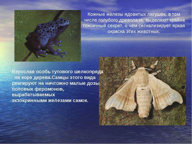 Кожные железы ядовитых лягушек, в том числе голубого древолаза, выделяют край...