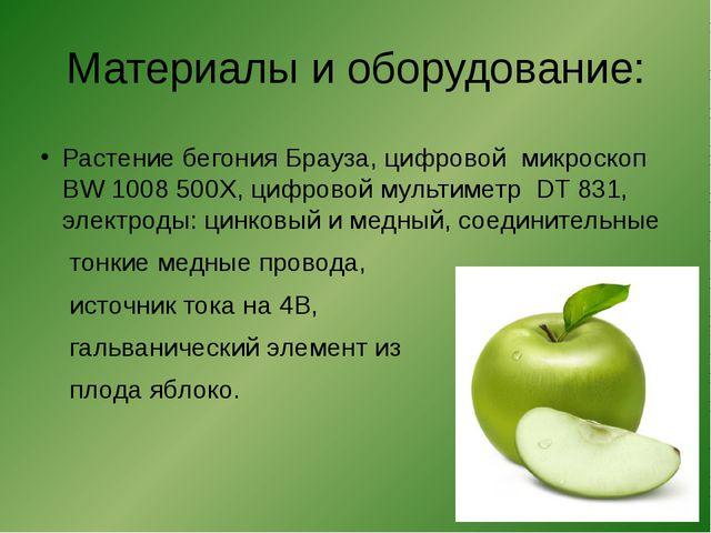 Материалы и оборудование: Растение бегония Брауза, цифровой микроскоп BW 1008...