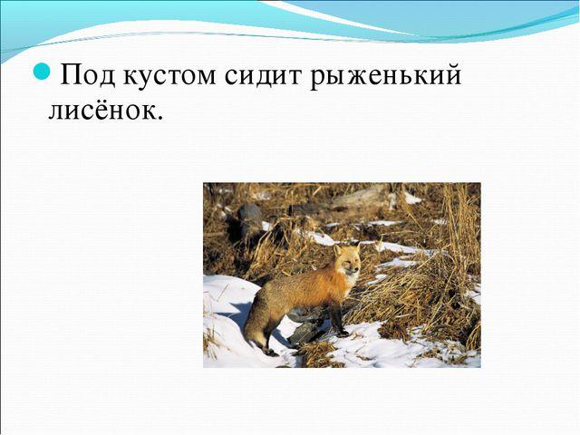 Под кустом сидит рыженький лисёнок.