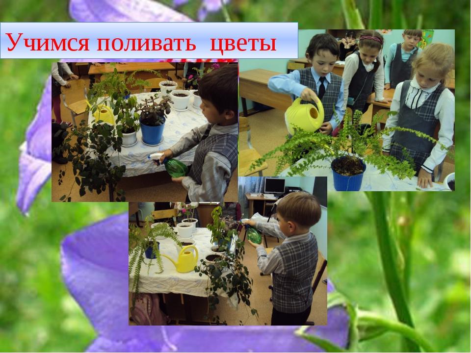 Учимся поливать цветы
