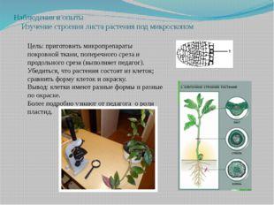 Наблюдения и опыты Изучение строения листа растения под микроскопом Цель: при