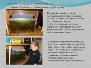 Наблюдения за повадками аквариумных рыб Задание. Выработка условного рефлекса