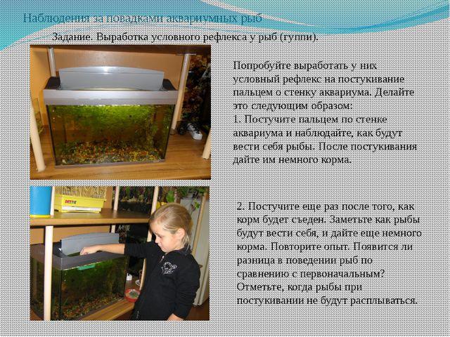 Наблюдения за повадками аквариумных рыб Задание. Выработка условного рефлекса...