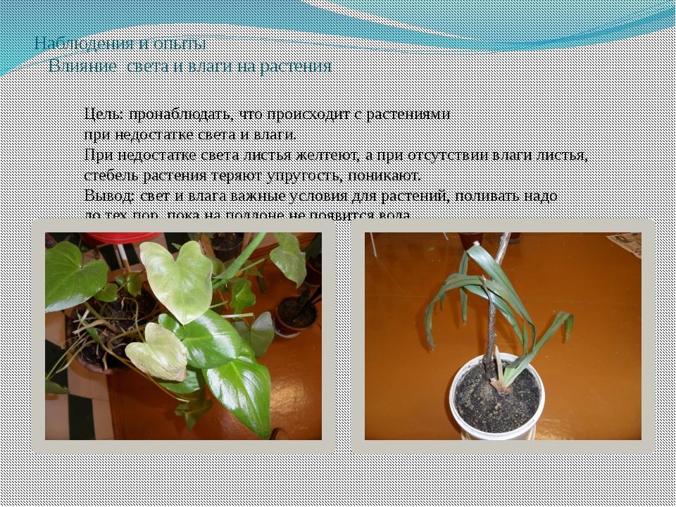 Наблюдения и опыты Влияние света и влаги на растения Цель: пронаблюдать, что...