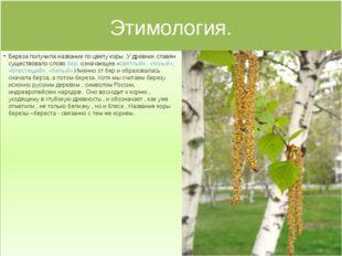 Этимология. Береза получила название по цвету коры .У древних славян существо