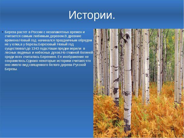 Истории. Береза растет в России с незапамятных времен и считается самым любим...