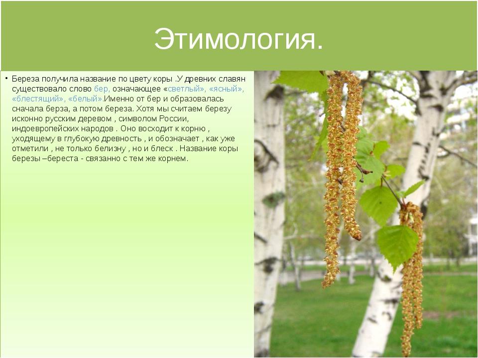 Этимология. Береза получила название по цвету коры .У древних славян существо...