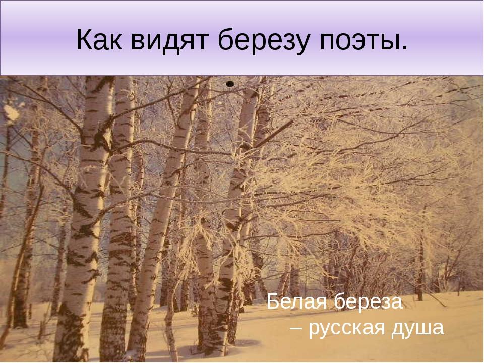 Как видят березу поэты. Белая береза – русская душа