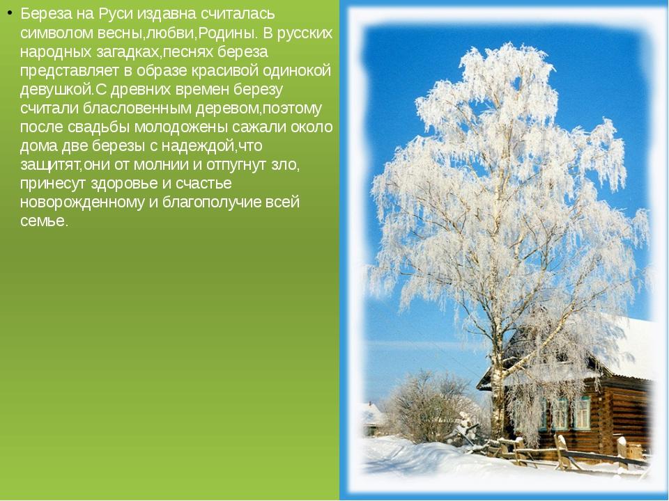Береза на Руси издавна считалась символом весны,любви,Родины. В русских народ...