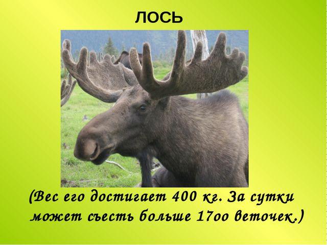 ЛОСЬ (Вес его достигает 400 кг. За сутки может съесть больше 17оо веточек.)