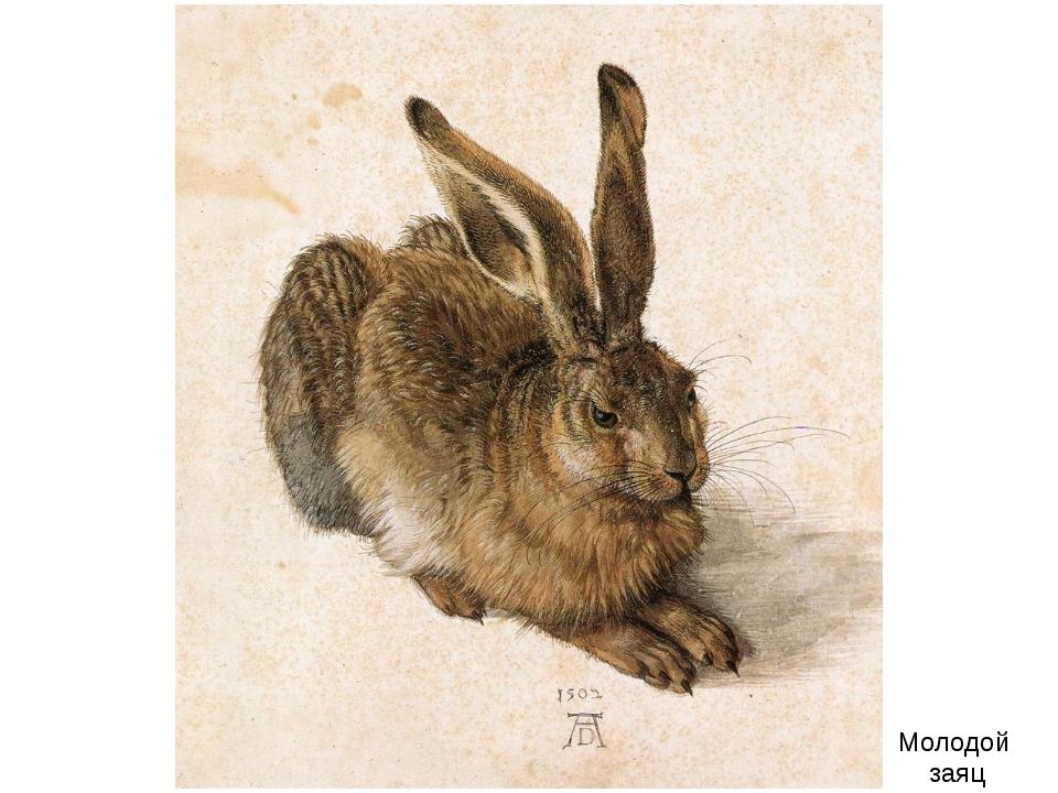 Молодой заяц
